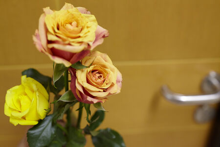 noone: Flower for patient when visiting her on  hospital