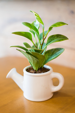 Watering can and plant over wooden table photo