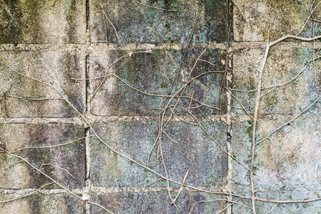root wood covered concrete block wall background photo