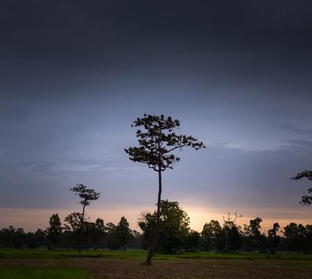 standing alone: Single Tree Standing Alone