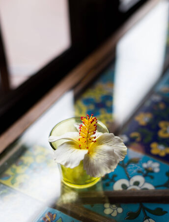 blossom flower on table photo