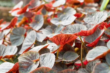 Red leaf in autumn. Imagens