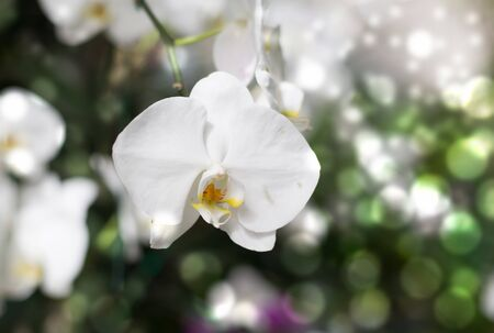 white orchid on bokeh background