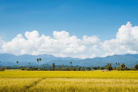 Rice field  blue sky cloud cloudy landscape background photo