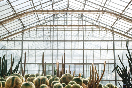 group of cactus in greenhouse Imagens