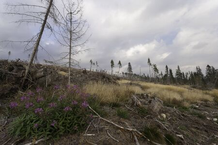 calamity: High Tatras after Windstorm Stock Photo