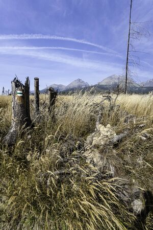 windstorm: High Tatras after Windstorm Stock Photo