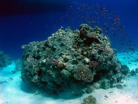 Underwater landscape in Red Sea Stock Photo - 14586586