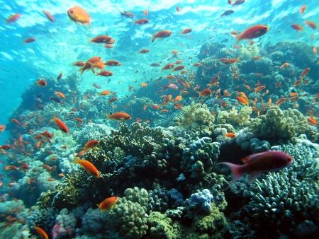 レッド海の魚の学校 写真素材