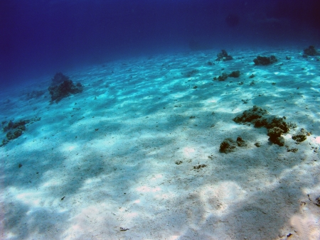 Seabed in Red Sea          photo
