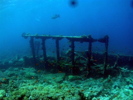 Wreck ships in Red Sea          photo