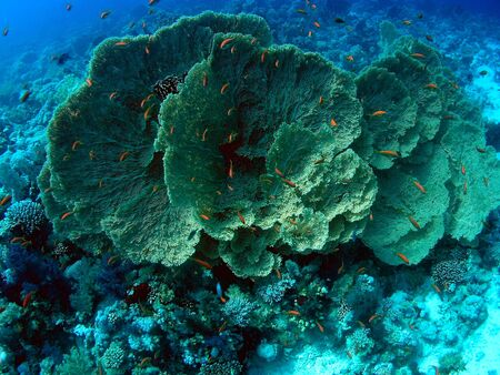 Underwater landscape in Red Sea          photo