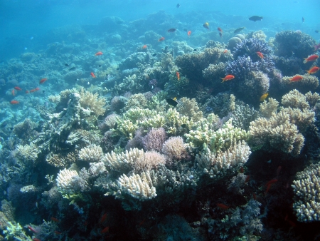 Underwater landscape in Red Sea          photo