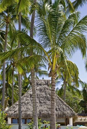 palapa: Beach house with palapa roof and palm trees by the Pacific Ocean in Mexico Stock Photo