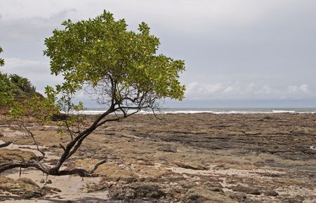 beachcombing: Pacific Ocean shore with rocks and tree in Costa Rica Stock Photo