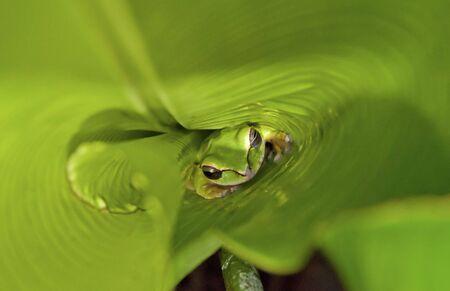 잎이 많은 식물의 바닥에 비용 Rican 잎 개구리 스톡 콘텐츠