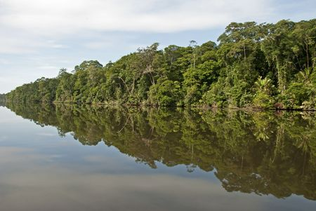 Reflection of jungle in a waterway of the Tortuguera National Park in Costa Rica Stock Photo