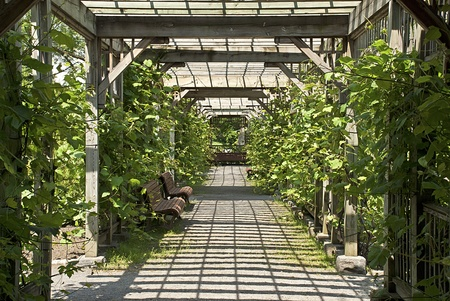 Sun drenched pergola with vines in the Botanical Garden of Montreal, Quebec, Canada