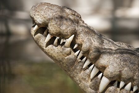 Close-up of a crocodiles head