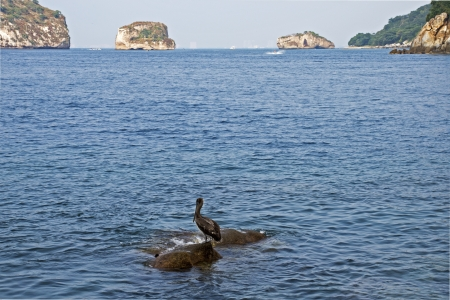 pelecanidae: Pacific Ocean with rock islands and pelican in foreground, near Puerto Vallarta, Mexico Stock Photo