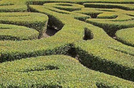 Gedeelte van een sier patroon groenblijvende tuin