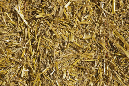 compacted: Cut, compacted, compressed straw for background