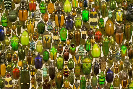 Display of a variety of preserved bugs. Suitable as background Banco de Imagens