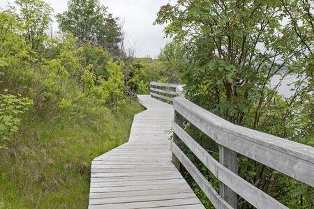 walk board: Elevated  boardwalk in nature park, St. Johns, Newfoundland