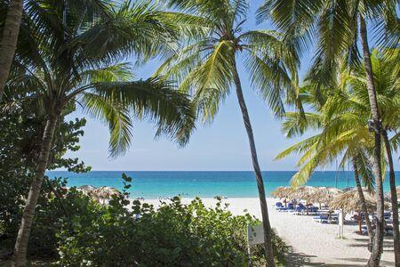 varadero: Tropical Cuban resort beach with palm trees in Varadero Stock Photo