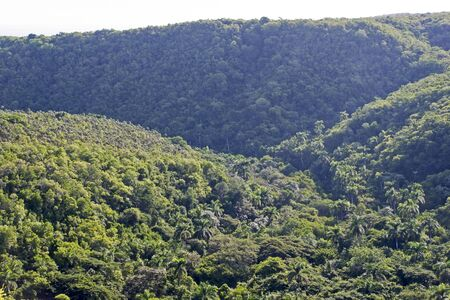 tropical evergreen forest: The Yumuri valley in Matanzas, Cuba Stock Photo