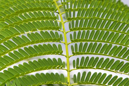 Closeup of a tropical fern, Pacific coast Stock Photo