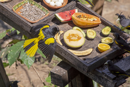 Bird feeding station in the tropics with a variety of dishes Stock Photo