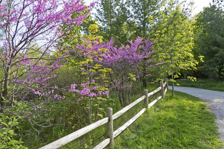 Flowering trees and bushes with path and fence in Eastern Canada