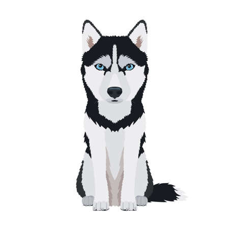 Vector portrait of sitting Siberian Husky with blue eyes isolated on white background
