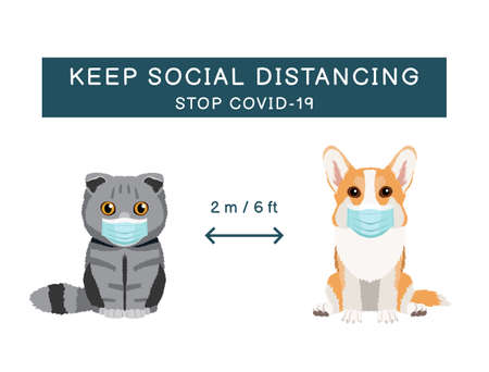 Coronavirus infection spreading prevention information sign with pets wearing medical masks. Scottish fold cat and pembroke welsh corgi. Inscription Keep social distancing. Stop covid-19 on white background