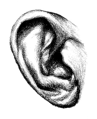 Human ear hand drawn in detail