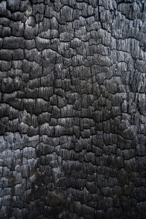 cremated: Black charred wood log interior burned in a forest fire, vertical aspect