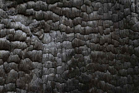 cremated: Charred black wood log interior burned in a forest fire, horizontal aspect Stock Photo