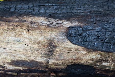 Charred log detail blackened by a forest fire, horizontal aspect Stock Photo - 89433981