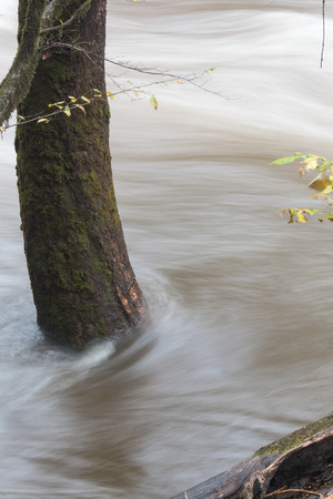 tn  tennessee: Flood waters rushing around the base of a tree, vertical aspect Foto de archivo