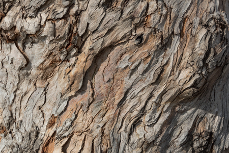 Background texture of layers of tree bark, thin and twisted, copy space, horizontal aspect