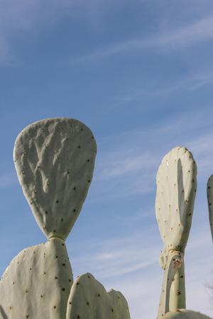 Sunlit cactus shapes against a blue sky, vertical aspect