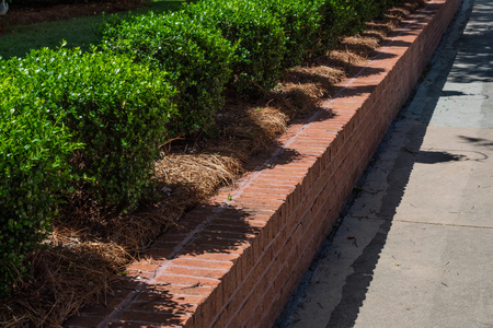 Tidy red brick retaining wall lined with boxwoods alongside a sidewalk, horizontal aspect Stok Fotoğraf