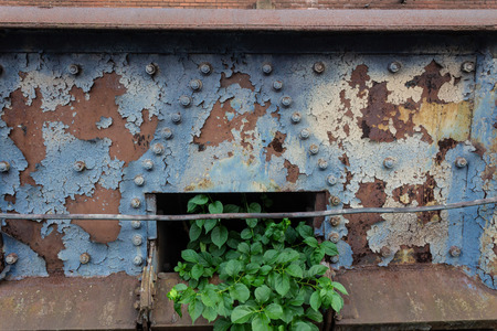 Hope abstract, old metal corroded, urban decay with beautiful green plant emerging, horizontal aspect Stockfoto