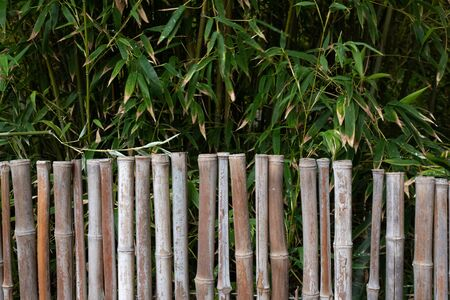 Background of bamboo fence with live bamboo overhead, tropical backdrop, creative copy space, horizontal aspect