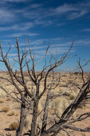 Dead tree branches before a dry desert plain with brown grasses, blue sky with wispy clouds, vertical aspect 스톡 콘텐츠
