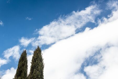 Tops of two thin cedar trees against a dramatic sky of clear blue with white clouds, creative copy space, horizontal aspect Stok Fotoğraf