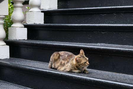 Crouching tabby cat on tall black wrought iron stairs, horizontal aspect Stok Fotoğraf