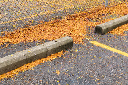 Asphalt parking lot with concrete curbs, chain link fence, thick bright yellow fall leaves, horizontal aspect