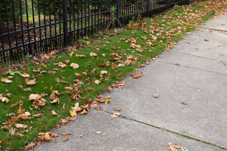 Sidewalk bordered with green grass and wrought iron fence, autumn leaves, horizontal aspect